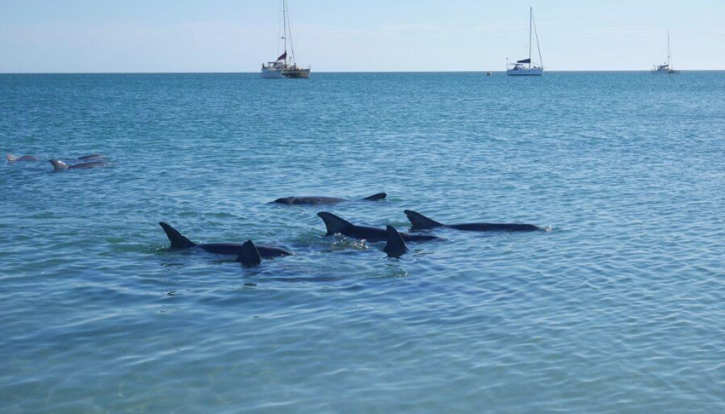 Roadtrip III – Shark Bay